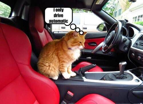 Image result for kittie in car